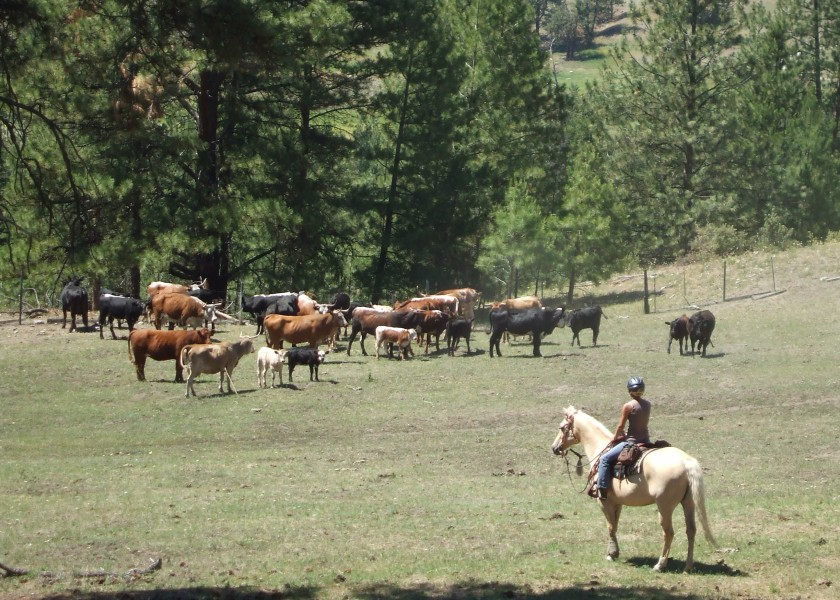 Tonasket July 2007 Horse Pics 476