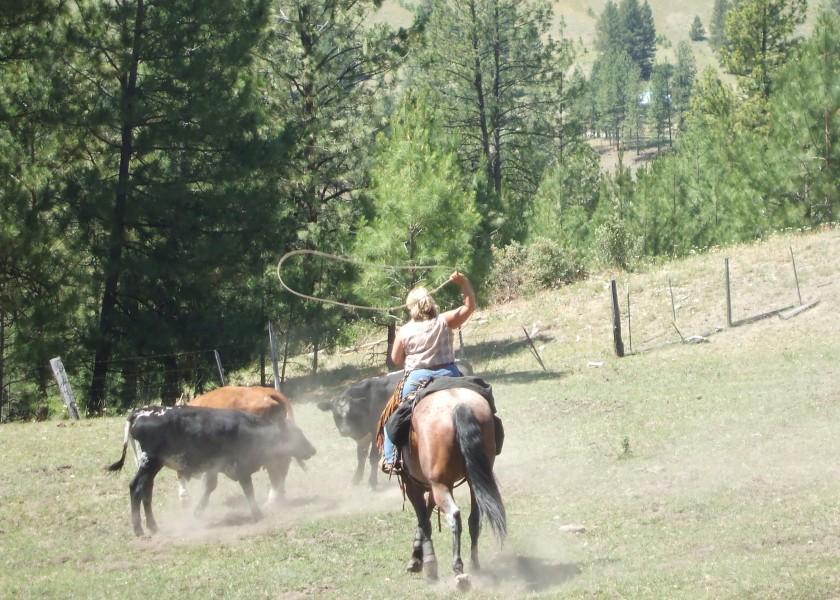 Tonasket July 2007 Horse Pics 479