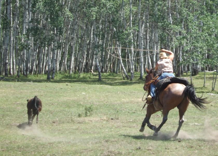 Tonasket July 2007 Horse Pics 504